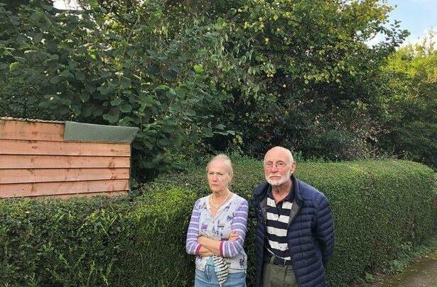 OAP, 82, fumes neighbour's overgrown garden knocks £20,000 off house value