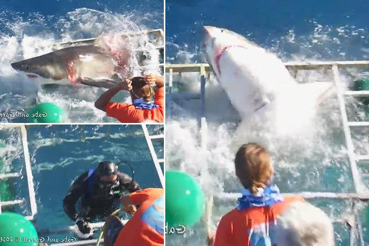 Terrifying moment diver gets trapped inside cage with a GREAT WHITE SHARK… but miraculously emerges unhurt