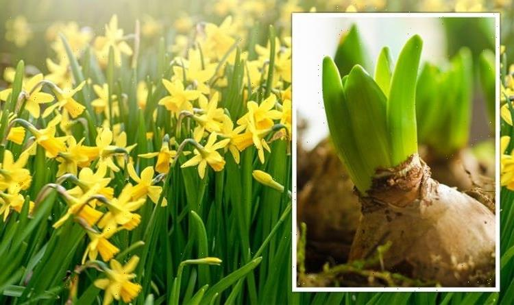 When to plant spring bulbs – the key guide for every garden
