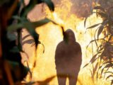 Emmerdale bosses hint Priya Sharma could be killed off in maze fire in new photo