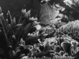 From the Archives, 1981: Great Barrier Reef gains world heritage status