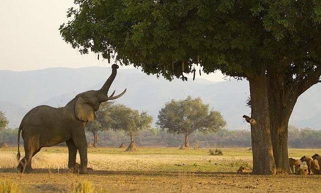 Tourist, 71, crushed to death by elephant in front of his son