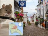 Up to 2,000 people without internet after RATS chew through cables